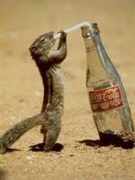 Minum_soda