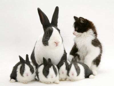 kucing dan kelinci yang bersahabat